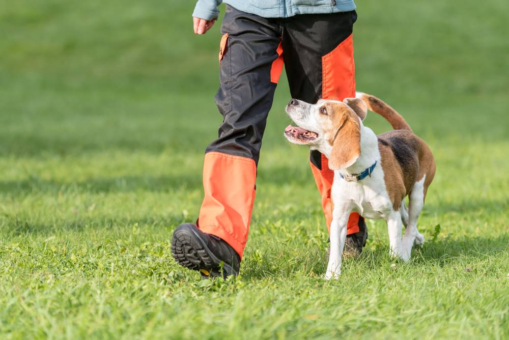 Why One-on-One Dog Training Works
