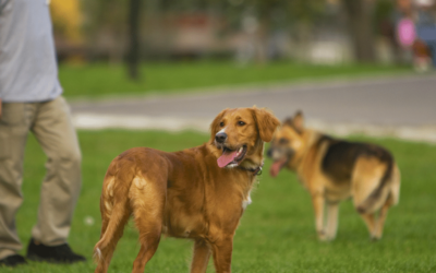 Positive Training for Dogs